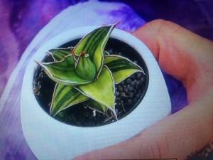 マツコの知らない世界 観葉植物